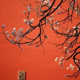 Обучающий курс - Специалист китайских метафизических искусств
