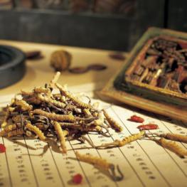 Обучение - Магистр восточной медицины